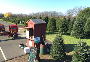 cv-tree-farm - Willard Family Christmas Trees