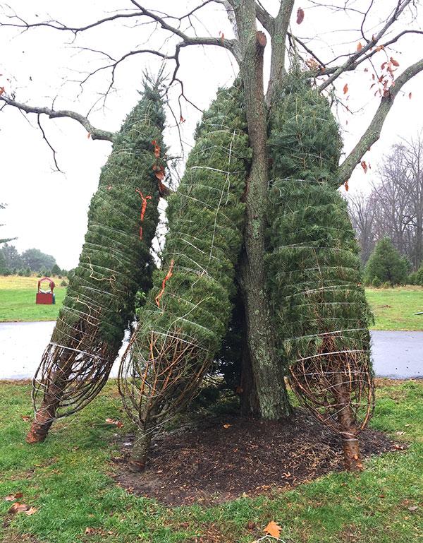 jug-hill-tied-trees