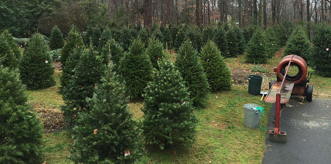 Christmas Tree Farm Nj